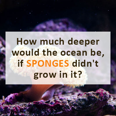 How much deeper would the ocean be, if SPONGES didn't grow in it?