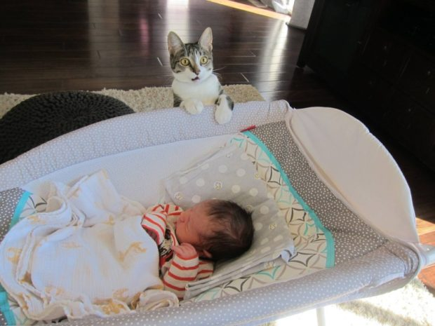 Couple forgot to tell their cat they were having a baby