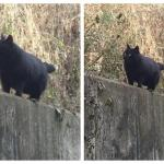 Is this a cat or a bear?