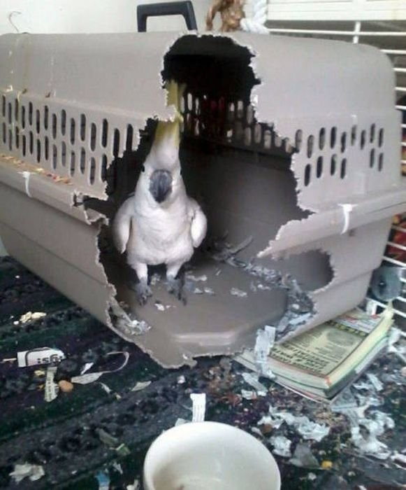 You can not cage this bird