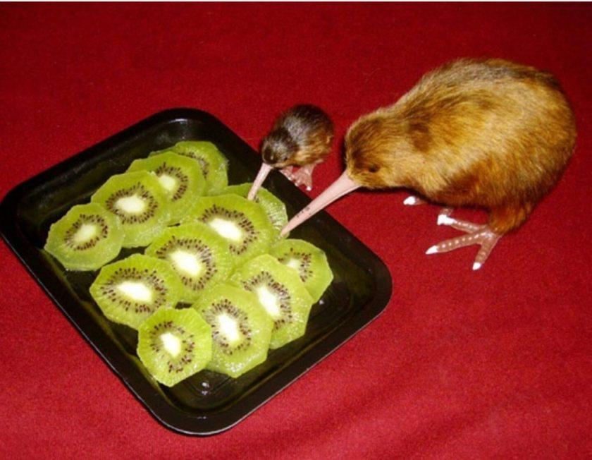 Kiwis eat kiwis