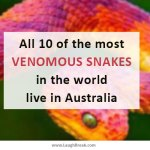 All 10 of the most venomous snakes in the world live in Australia