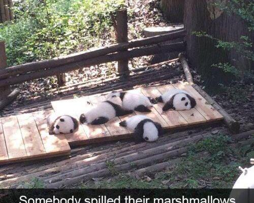 Somebody spilled their marshmallows