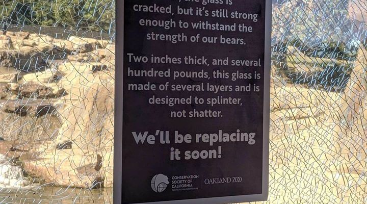 This cracked glass still strong enough to withstand the bears