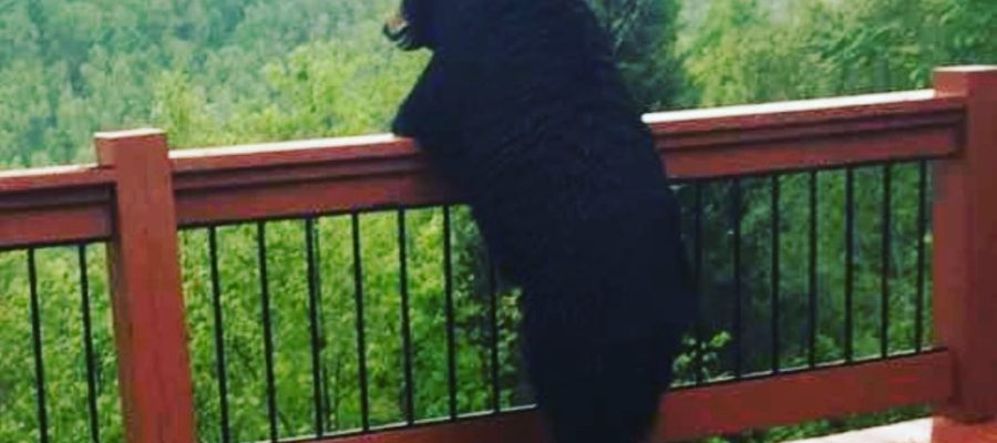 Just a bear chilling in your backyard