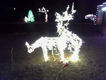Frisky Deer
