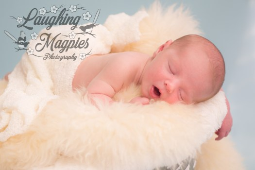 17 day old newborn posed sleeping in bucket with cream fill against sky blue background photographed by Heather Tristan of Laughing Magpies Photography in Bothell Washington