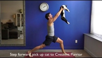 Get In Shape With Cat Workout Videos