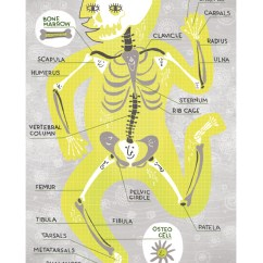 Kids Skeletal System Diagram Ford 351w Firing Order Body Systems, Cute Illustrations That Identify Different Parts Of The Human Anatomy