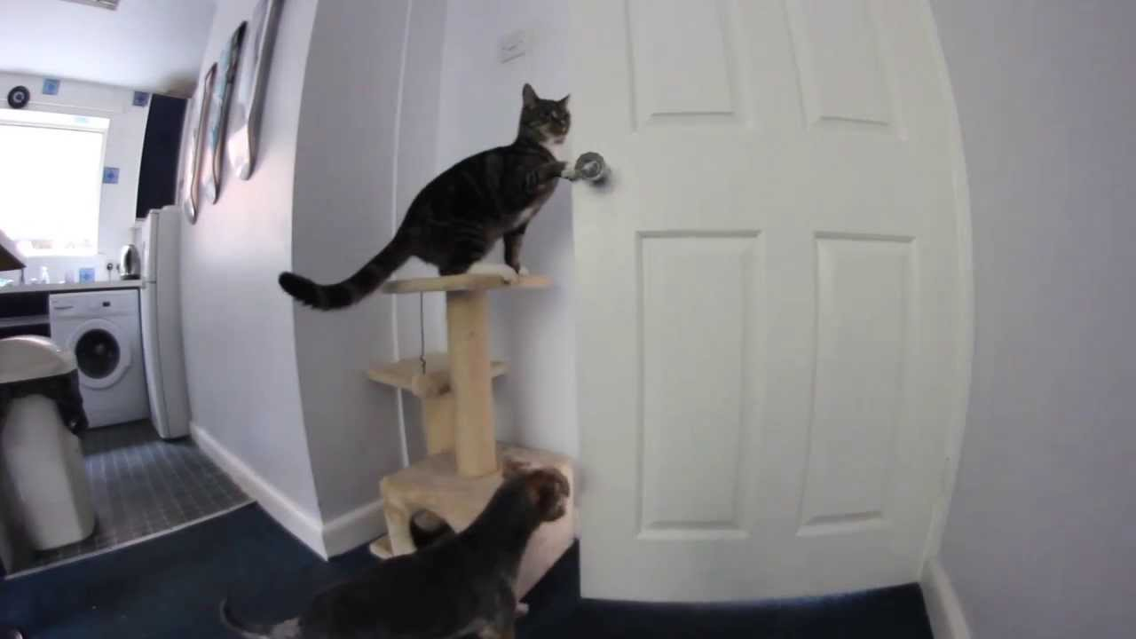 Cat Cleverly Uses Both Paws to Turn a Doorknob