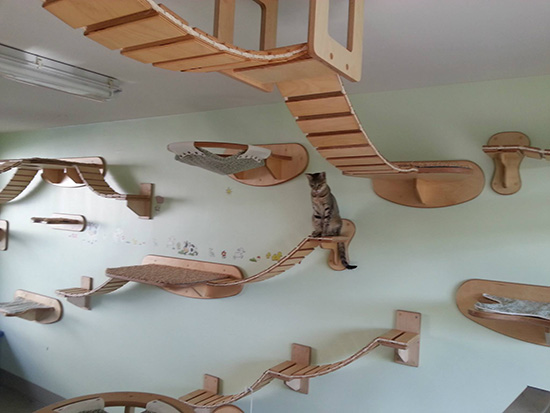 Elaborate Elevated Cat Perches and Suspended Walkways