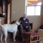 Daughter Catches an Incredible Moment Between Non-Verbal Father with Alzheimer's and Loving Dog