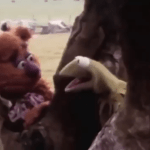 Kermit the Frog and Fozzie Bear Hilariously Engage In Improvised Existential Banter In a 1979 Camera Test