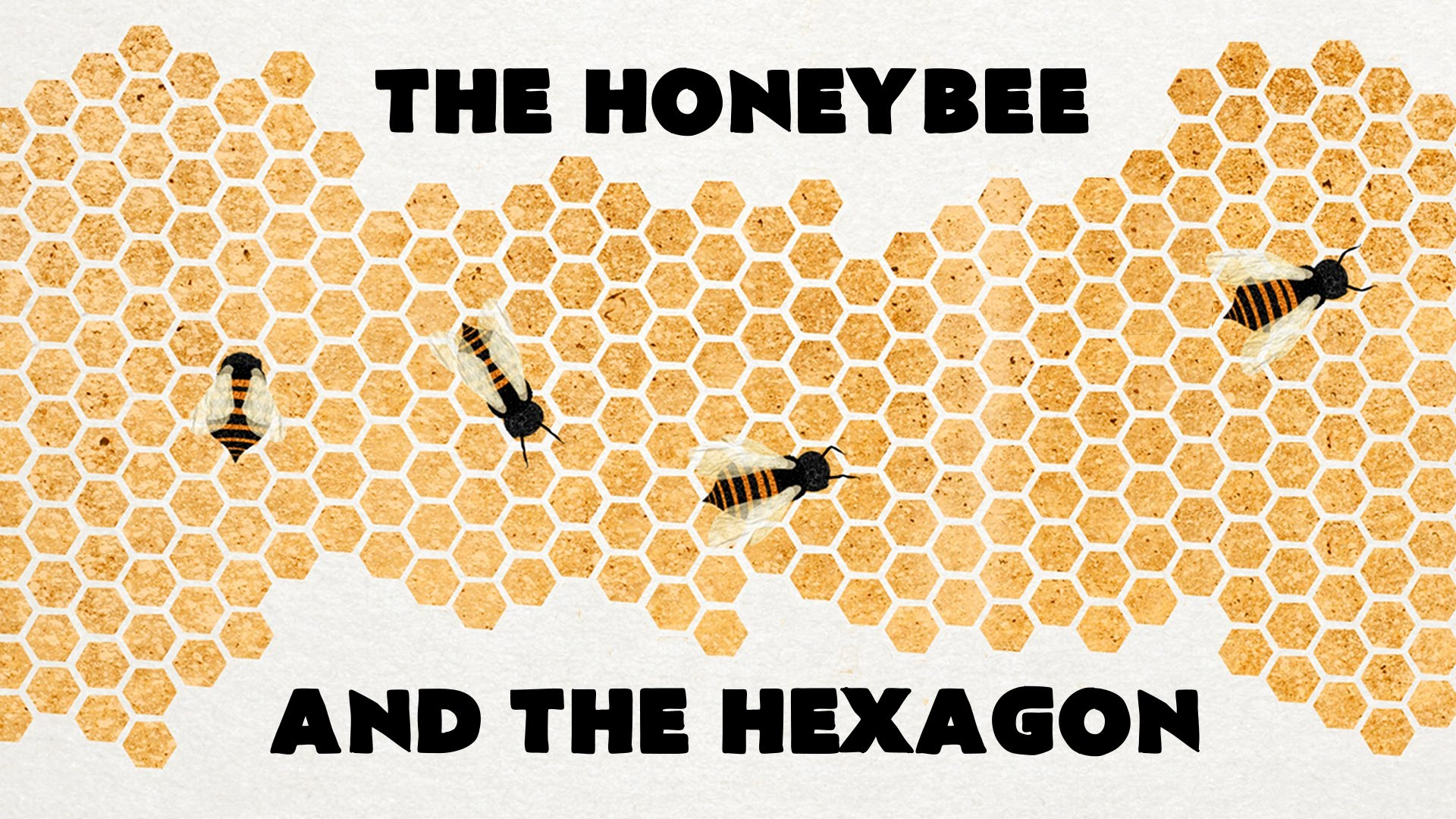 The Honeybee And The Hexagon A Ted Ed Animation About