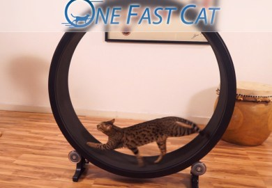Exercise Running Wheel For Cats