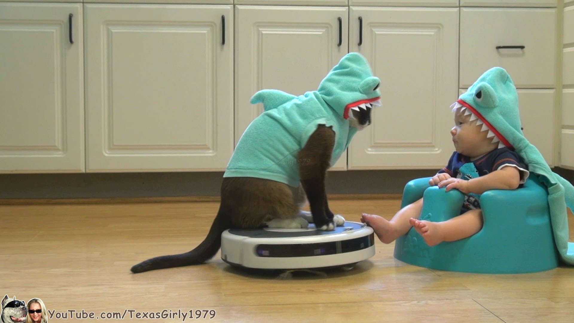 Cat Wearing a Shark Costume Entertains Baby Also Dressed