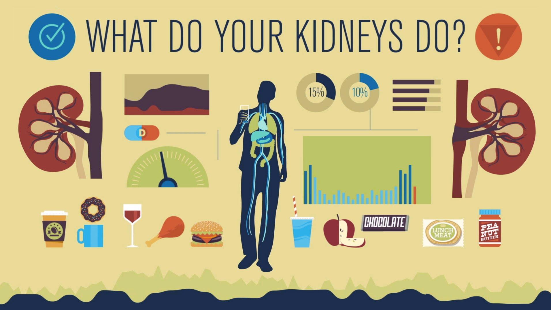 A Ted Ed Animation Explaining How The Human Kidneys Work