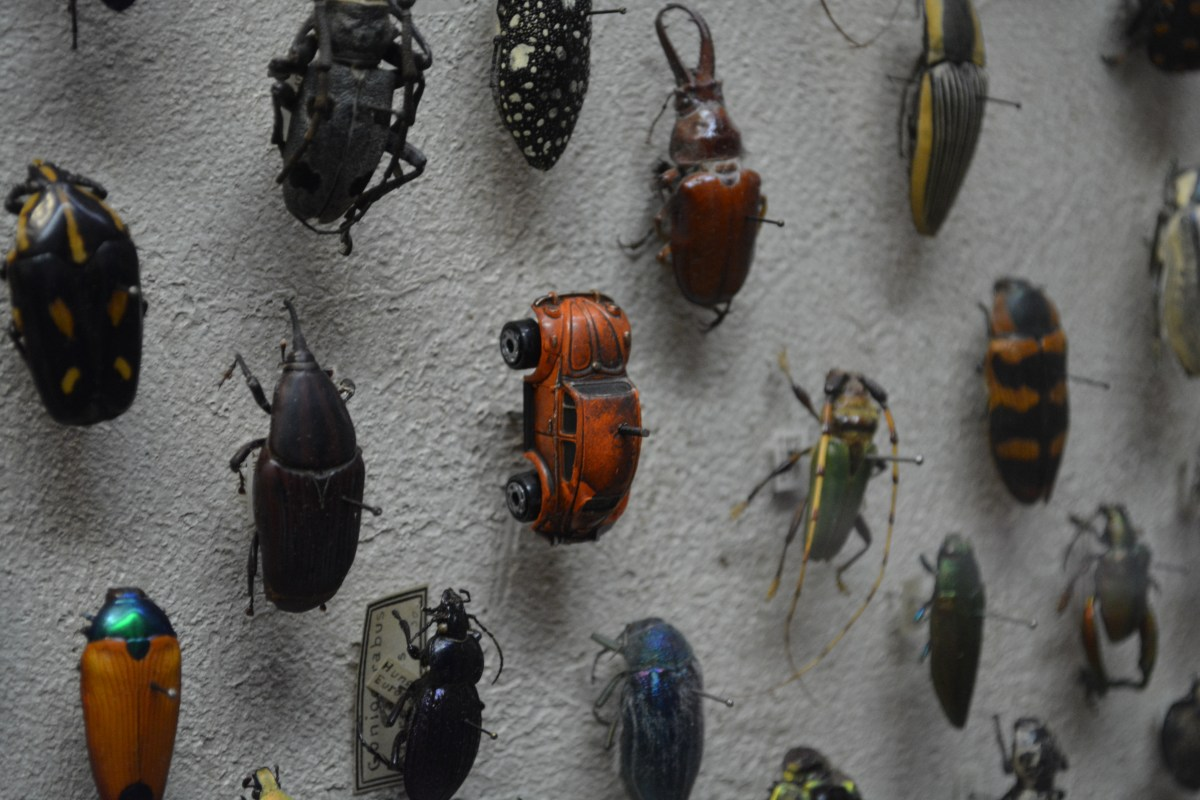Cleveland Museum Of Natural History Patron Spots Tiny Vw