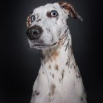 Amusing Photos That Show Concerned Dogs Appearing to Question the Photographer's Sanity