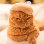 Unamused Cats Begrudgingly Model Tiny Little Hats Knitted From Their Own Fur