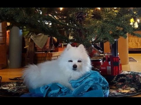 Gabe the Dog, The Little White Dog Who Was Known for His Very Big ...