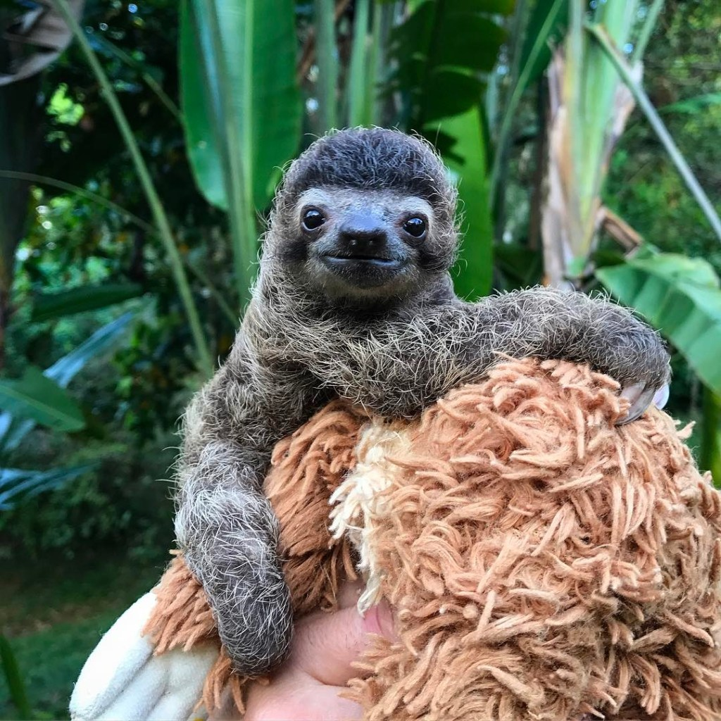 Coyote Peterson Helps a Rescued Baby Sloth Go Poo in the Costa Rican Rainforest