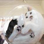 The Dim Dim Bubble Bowl, A Hanging Transparent Cat Bed That Gives Humans a View From All Angles