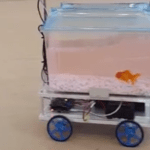 A Fish Becomes the Master of Its Own Destiny Inside a Robotic Fish Tank That It Controls