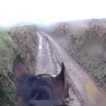 A Retired Racehorse Unseats His Rider When He Mistakes a Rural Dirt Road for a Racetrack