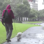 Berkeley, California Man Demonstrates the Method He Used to Train His Cat to Walk on a Leash