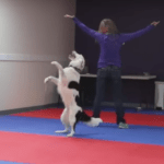 An Agile Border Collie Performs an Incredible Dance Routine In Perfect Synch With His Beloved Human