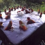 Amazing Footage of Thirty Hummingbirds Partaking In a Peaceful Bathing Ritual Together