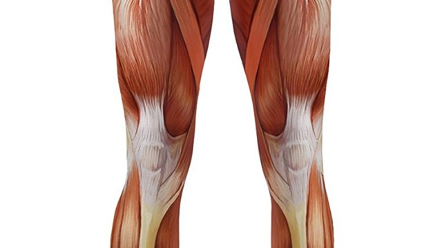 muscle leggings, exposed leg muscle flesh fashion leggings, Muscles