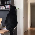 A Tuxedo Cat Adorably Mimics the Wagging Tail of a Cat Clock While Sitting Upon His Human's Desk