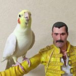 A Melodic Cockatiel Performs a Medley of Queen Songs While Sitting on Arm of a Freddie Mercury Doll