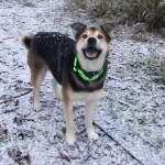 An Adorably Motivated Dog Tries His Best to Catch Falling Snowflakes in His Open Mouth