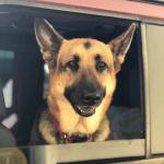 Bagel Shop Worker Captures the Facial Expressions of Dogs as They Come to the Drive-Thru Window