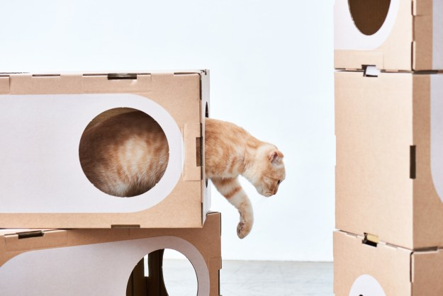 a-cat-thing-modular Wonderfully Modular, Interchangeable Cardboard Cat Dwellings Designed by Taiwanese Architects Random