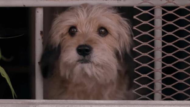 benji Benji Returns to Warms Everyone's Heart in Netflix's Reboot of the Classic Dog Film Random
