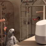 A Chatty Parrot Tries to Have a Conversation With Alexa After Telling Her to Turn Off the Lights