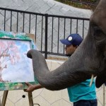 An Artistic Elephant in Japan Demonstrates Her Unique Talent by Painting a Cherry Blossom Tree
