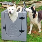 The Crazy Russian Hacker Tries an Enclosed Home Dog Spa on Two of His Three Beautiful Huskies