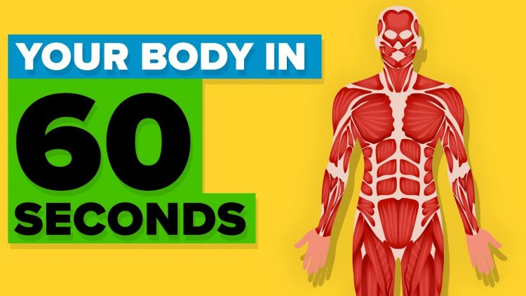 Your-Body-in-60-Seconds-e1533920711695 A Fascinating List of Autonomic Functions That Occur Within Human Bodies Every 60 Seconds Random