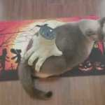 A Tolerant Cat Allows a Battery Powered Severed Hand Halloween Prop to Massage Her Butt for a Little While