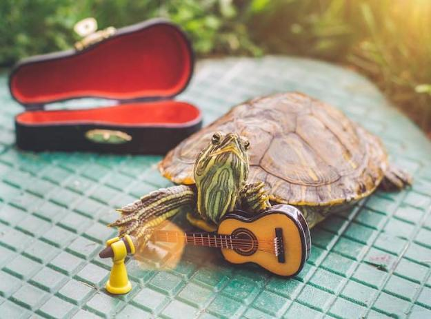 Squishy-and-Rosy-Guitar-and-fan Squishy and Rosy, Two City Dwelling Photogenic Turtles Who Model Handmade Miniature Accessories Random