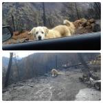 Brave Dog Who Waited at Site of Home Burned During California Wildfire Reunites With His Beloved Humans