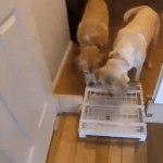 A Pair of Curious Dogs Figure Out How to Operate Two-Dimensional Game That Releases Yummy Treats