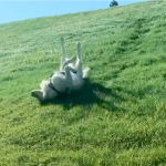 Gleeful Dog Repeatedly Slides Down Hills Upside Down