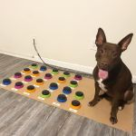 Speech-Language Pathologist Teaches Her Dog to Communicate Through a Custom Button Talking Board