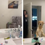 Dog Is Confounded by His Human's Reflection in Bathroom Mirror During a Game of Hide and Seek